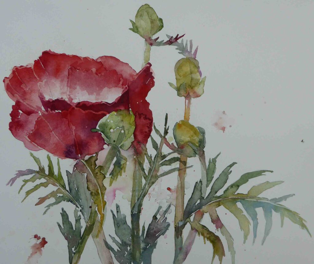 First-Poppy--by-Carol-Whitehouse--SOLD